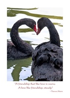 Image for Anniversary Black Swans Card